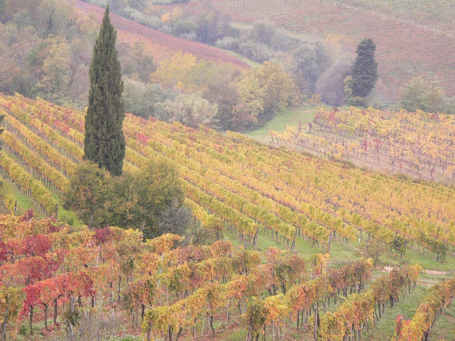 Raccolta Olive Toscana Nov 06 _1 245bassa | Olio ...