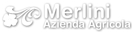 Olio extravergine Merlini, Toscana. Vendita diretta e on line di ottimo olio extravergine di oliva toscano ricco di polifenoli