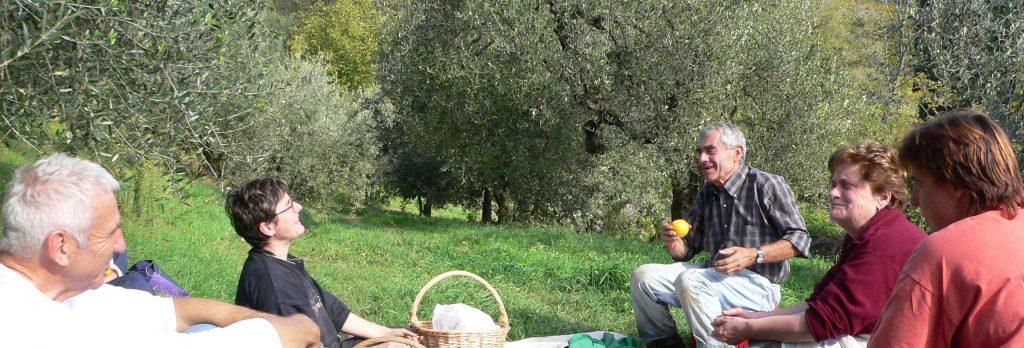 Visite guidateAziennda Merlini degustazione olio extravergine (Certaldo-Firenze)